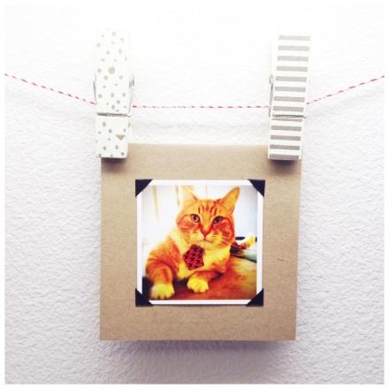 Fancy Orange Cat Wearing a Tie